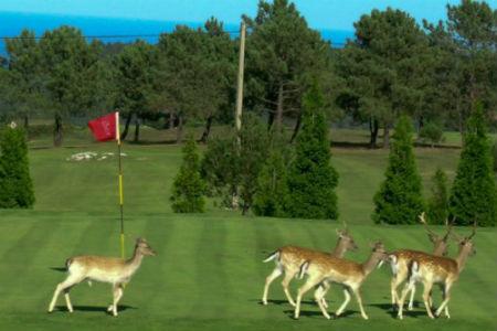 Juega al Golf en Asturias